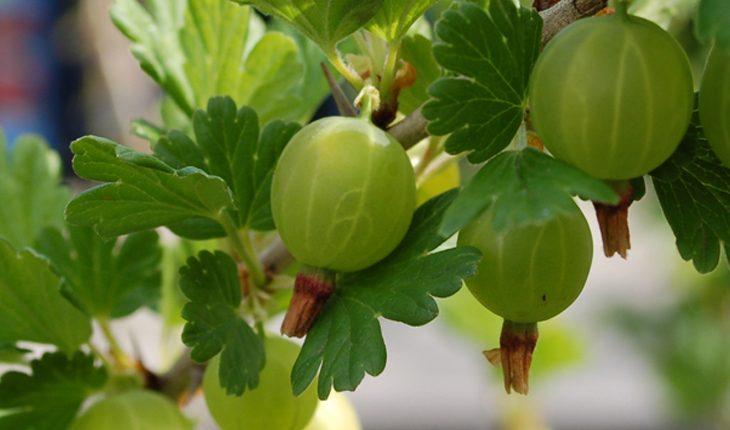 Obstgehölze pflanzen
